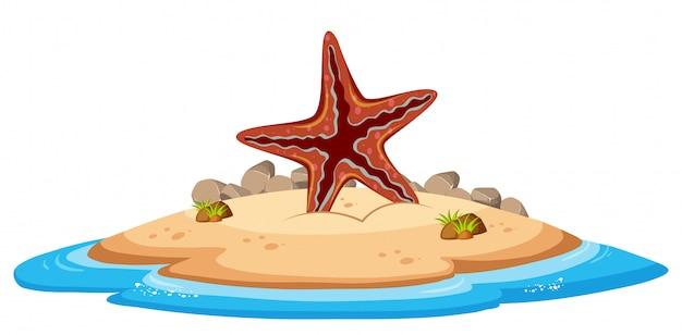 Estrela do mar isolada na ilha
