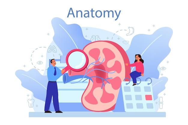Estudo de órgão interno humano