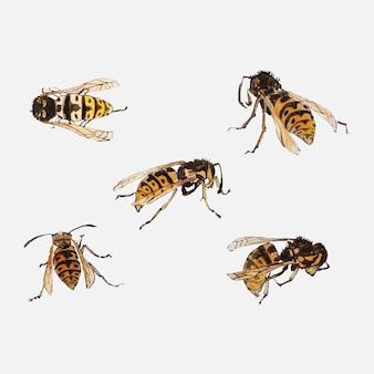 Estudos de vespas por julie de graag