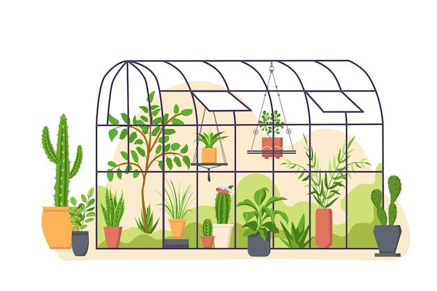 Estufa do jardim. casa de laranjal botânica de vidro com cactos e plantas tropicais cultivadas no vaso. conceito de vetor de natureza verde dos desenhos animados. laranjal botânico, estufa para ilustração de cultivo