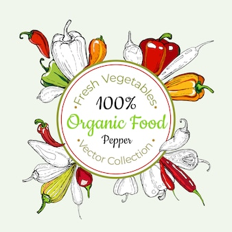 Etiqueta do vetor do vintage dos mantimentos vegetais da pimenta doce, cartaz, molde da etiqueta. linha de comida fresca de hipster mão desenhada ilustração.