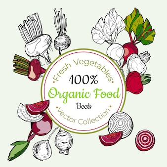 Etiqueta do vintage dos mantimentos vegetais das beterrabas