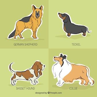 Etiquetas da raça do cão