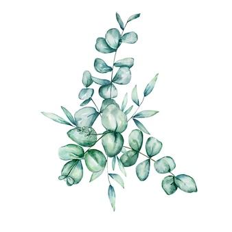 Eucalipto em aquarela. galhos e folhas de eucalipto pintados à mão isolados