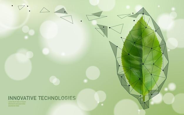 Extrato orgânico essencial de chá verde