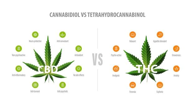 Faixa branca com comparação entre cbd e thc
