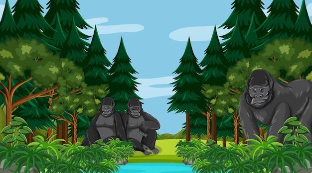 Família de gorilas em floresta ou cenário de floresta tropical com muitas árvores