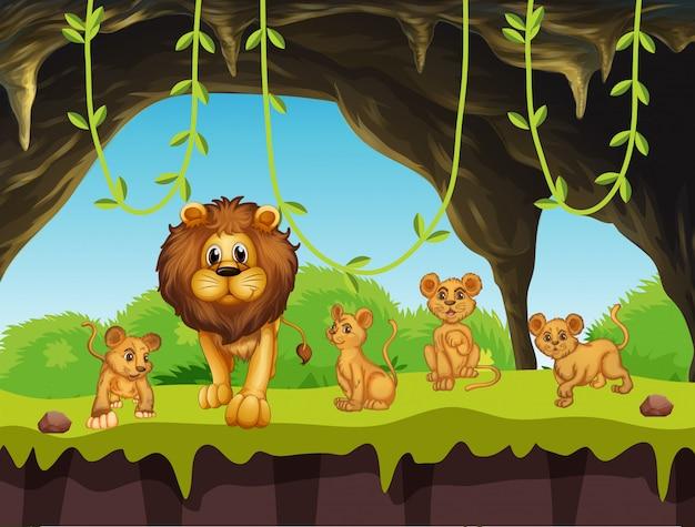 Família de leão na natureza