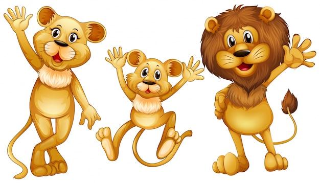 Família de leões com uma ilustração de pequeno filhote