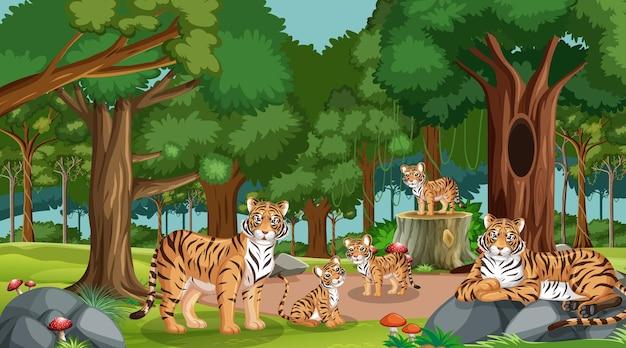 Família de tigres em floresta ou cenário de floresta tropical com muitas árvores