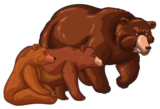 Família de ursos com filhote