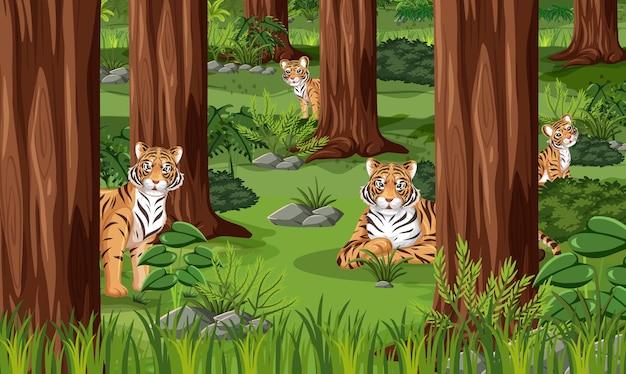 Família do tigre no fundo da paisagem da floresta