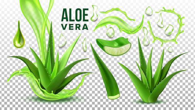 Farmácia suculenta aloe vera