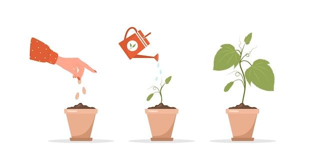 Fases da muda crescendo em vaso