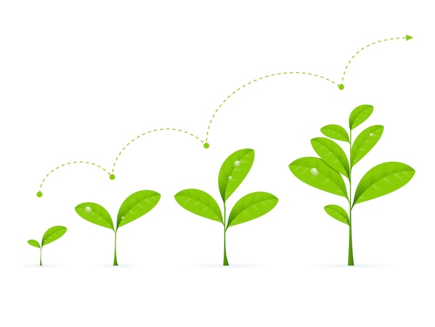 Fases do crescimento da planta verde. ilustração em vetor de desenvolvimento de conceito