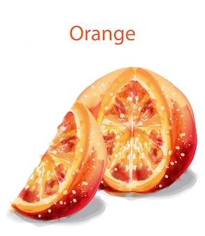 Fatia de laranja frutas em aquarela