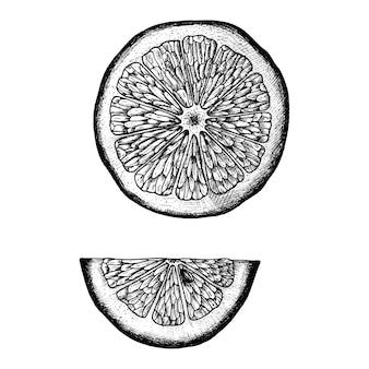 Fatia desenhada de mão de limão