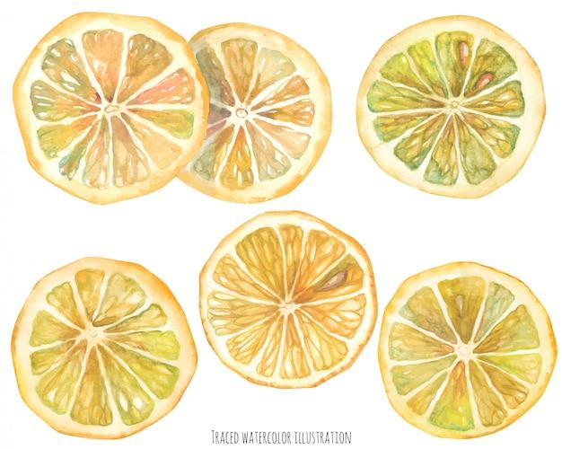 Fatias de limão aquarela