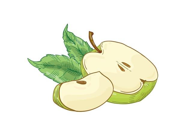 Fatias de maçã verde desenhadas à mão. frutas de verão cortadas pela metade e um quarto com folhas isoladas. nutrição saudável, produto ecológico
