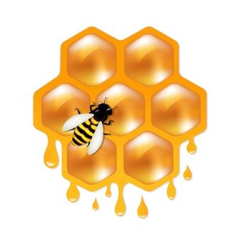 Favos de mel com abelha