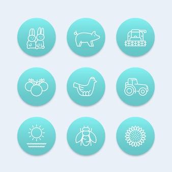 Fazenda, ícones de linha de rancho, galinha, porco, colheita, vegetais, girassol, colheitadeira, agrimotor