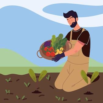 Fazendeiro colhendo vegetais