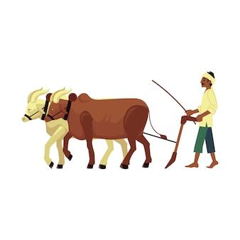 Fazendeiro indiano descalço arando o campo por meio de vacas com o tradicional lenço na cabeça