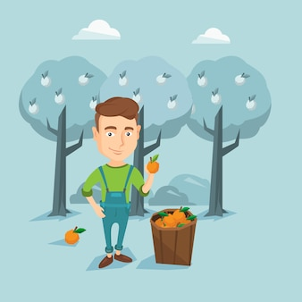 Fazendeiro que recolhe a ilustração do vetor das laranjas.