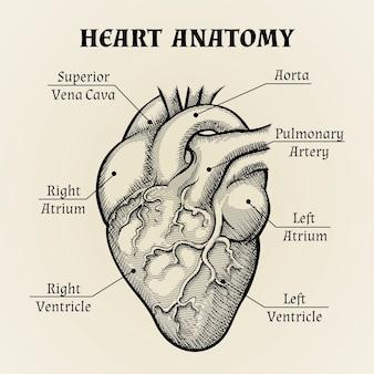 Feche acima da anatomia do coração preto e branco com design gráfico de etiquetas.