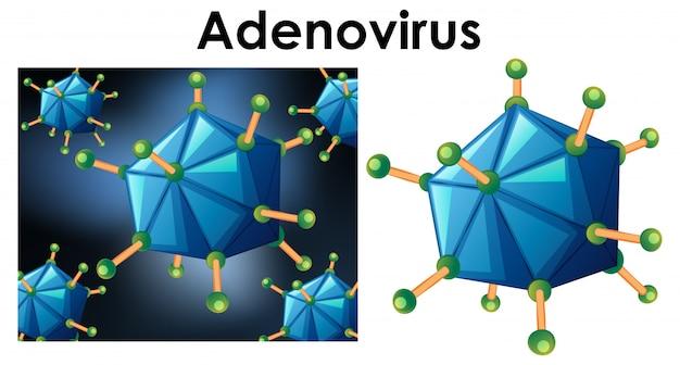 Feche acima do objeto isolado do adenovírus do nome do vírus