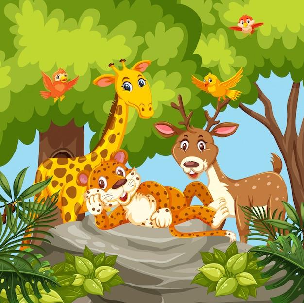 Feliz, animais, em, selva