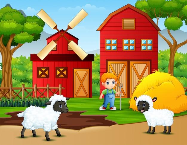 Feliz pequeno agricultor e ovelhas na fazenda