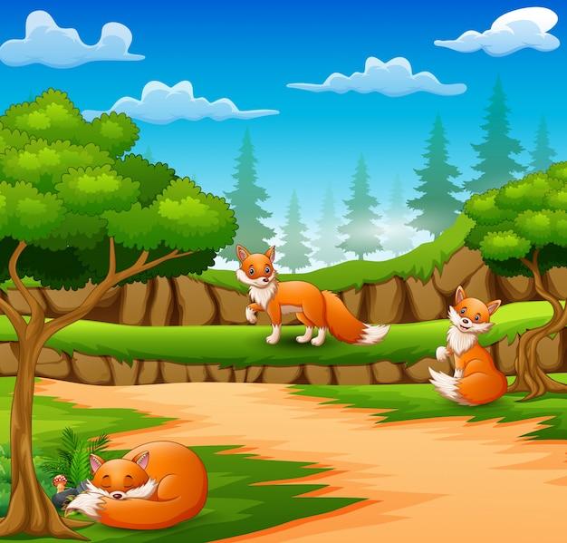Feliz três desenhos animados de raposa na cena da natureza