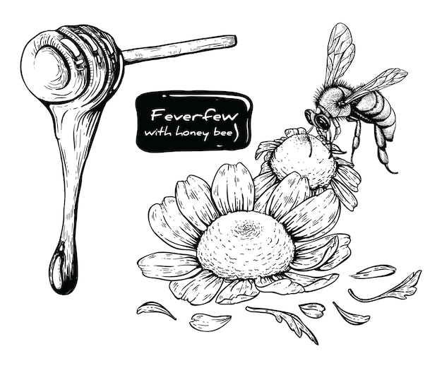 Feverfew e abelha com linha-arte em