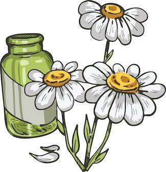 Feverfew ou camomila ou planta semelhante a camomila margarida. ilustração em vetor tanacetum parthenium