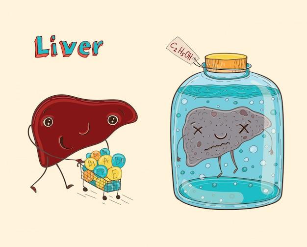 Fígado humano de personagem de desenho animado
