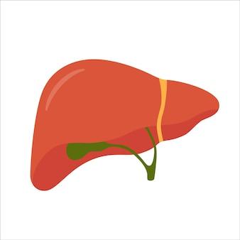Fígado humano e vesícula biliar