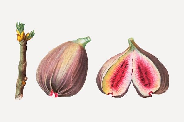 Figos maduros