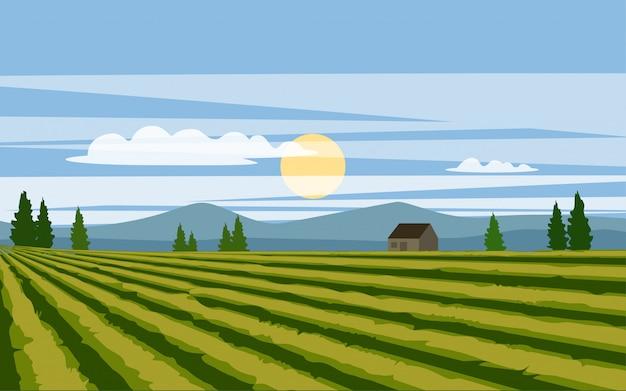 Filas de fazendas no campo