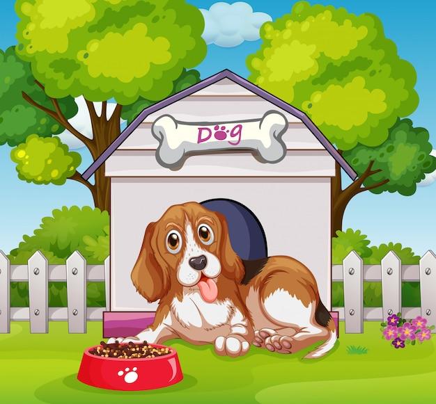 Filhote cachorro, vivendo, em, househouse