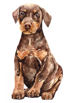 Filhote de cachorro doberman pinscher. aquarela de cachorro fofo.