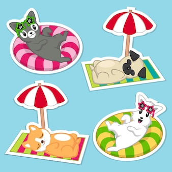 Filhotes de cachorro no set de verão