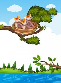 Filhotes no ninho no galho de árvore