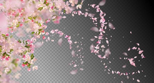Filial de sakura na primavera com pétalas caindo e elementos transparentes desfocados