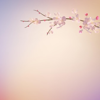 Filial sakura na primavera