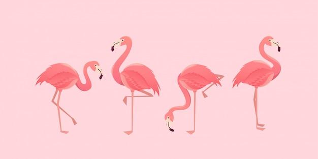 Flamingo bird illustration design