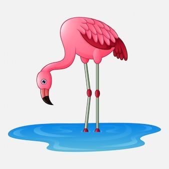 Flamingo bonito dos desenhos animados