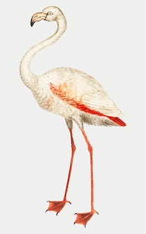 Flamingo em estilo vintage