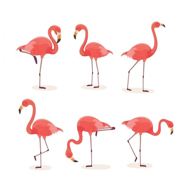 Flamingo pássaro tropical