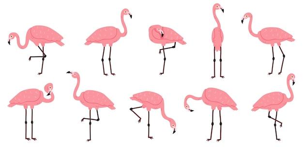 Flamingo rosa. conjunto de vetores de pássaros exóticos de flamingos, penas rosas e personagens animais africanos